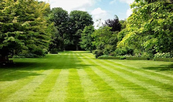 How To Keep Your Turf Green During Summer
